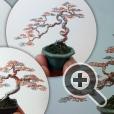 Изящные формы деревьев бонсай от Кена То (Ken To) выполнены из обычной проволоки