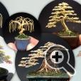 Разнообразный дизайн проволочных деревьев бонсай