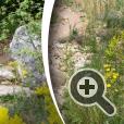 L'Occitane Garden. Дизайнер: James Basson. Выставка цветов и ландшафтного дизайна в Челси.
